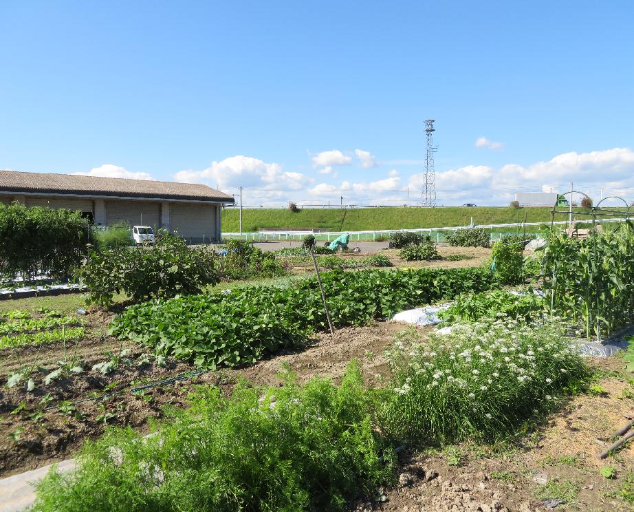 ふれあい体験農園のイメージ